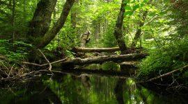 Toxikologie und Ökotoxikologie